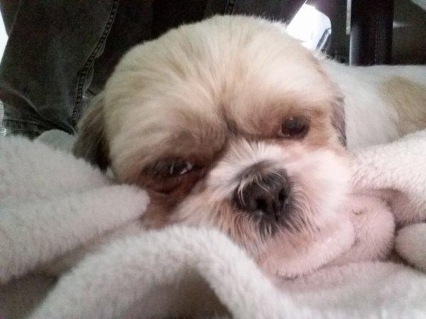 mon petit chien chouppy♥