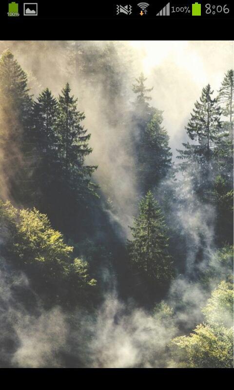 La brume, la forêt, la solitude.