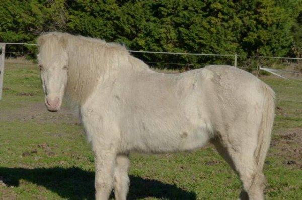 Luttez contre les abandons de chevaux !
