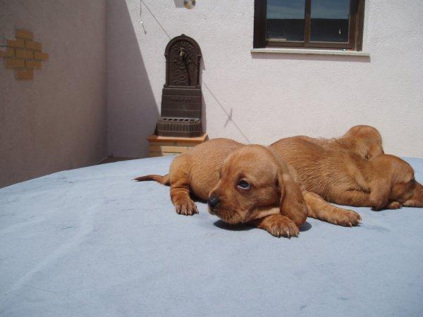 cachorros 2012