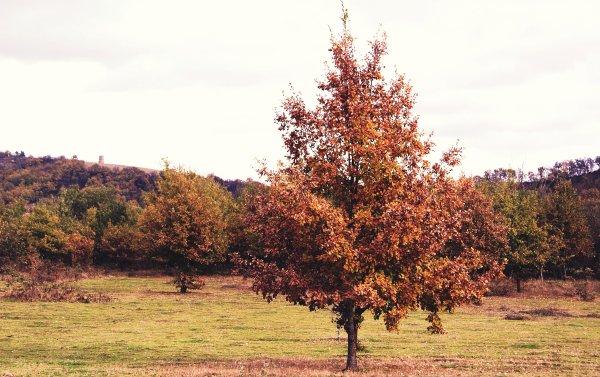 Un jour d'automne.  Modéle : Caroline