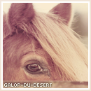 Photo de Galop-du-desert