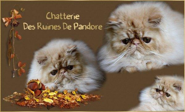 CHATTERIE DES RUINES DE PANDORE