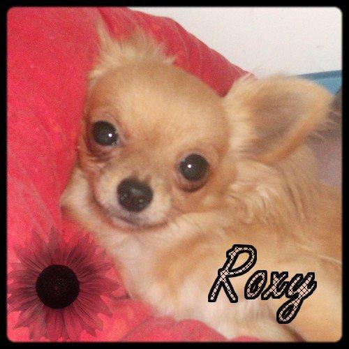 Roxy ma chichi