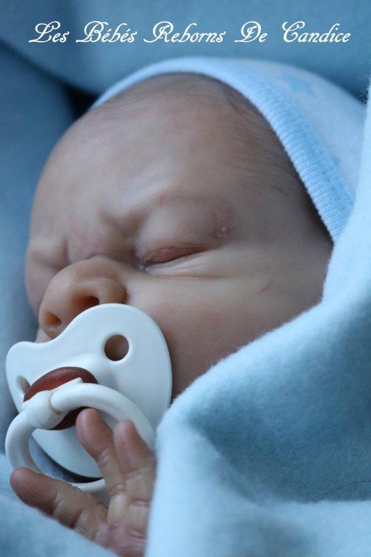 Bébé en cours de création (disponible à l'adoption)