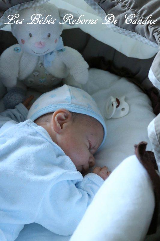 Edouardo (adopté par Milène)