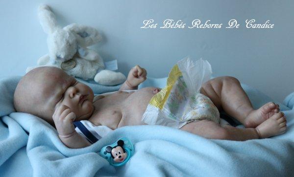 Suite album de mes bébés exposés au salon de Rieux en Cambresis