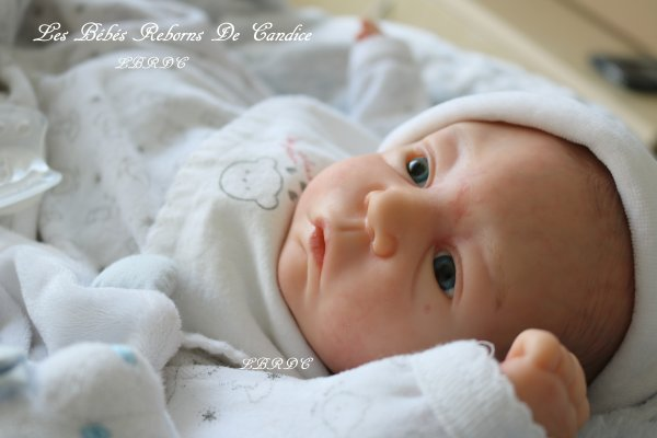 Quentin, pour collectionneuse débutante ou petite fille (adopté)