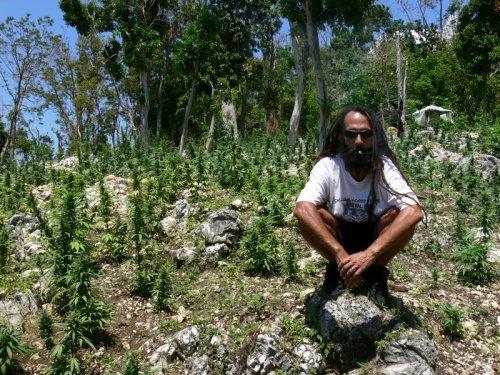"""la législation anti-marijuana  en Jamaïque :extrait du livre : """"Reggae collection"""" de Roger steffens et Peter Simon"""