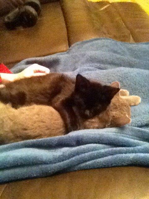 Mes chatons!