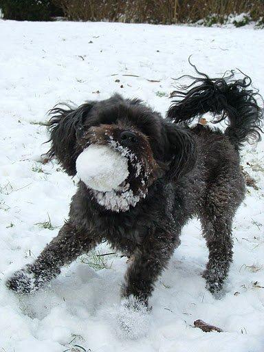 Zappy dans la neige