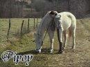 Photo de Pipoy