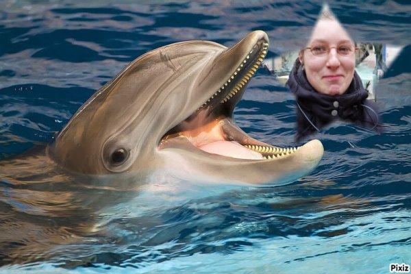 Le dauphin et moi