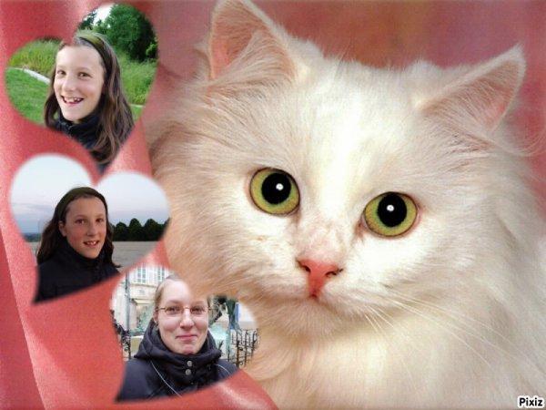 Le chat et moi