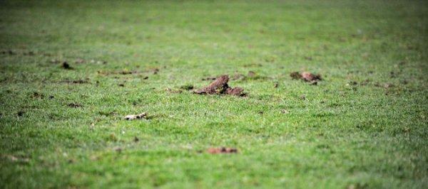 """Gourvennec : """"Le terrain est un vrai problème"""""""