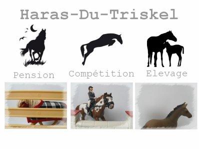 ♣ Bienvenue au Haras-Du-Triskel ♣