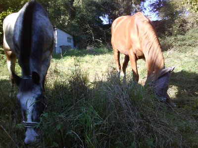 Vaudou... Septembre 2010