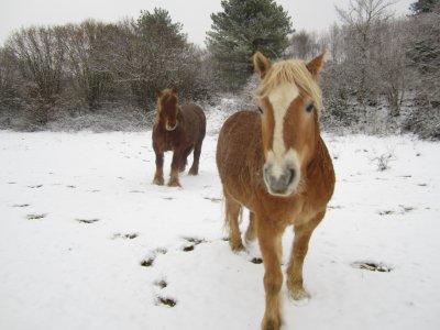 La neige, la neige, la neige :)