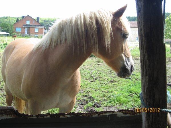 Au milieu de nulle part, un cheval et une fille ...