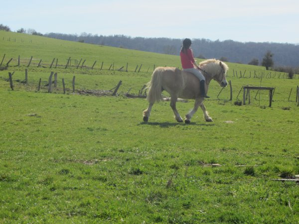 Mon expérience à votre service : avoir un cheval qui répond mieux aux demandes.