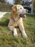 Photo de mon-chien-ma-vie-jim