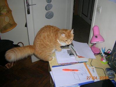 C'est le bordel on peut plus metrre une patte sur ce bureau ...
