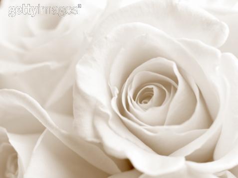 ma belle fleur blanche. Black Bedroom Furniture Sets. Home Design Ideas