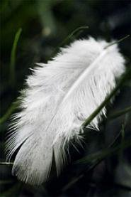 Un Ange à ma porte.