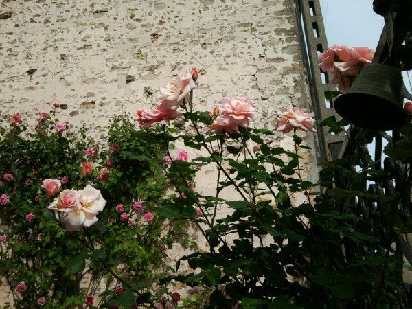 La rose est la fleur de l'amour...