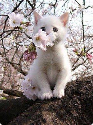 ~ Saleté de chat. ~