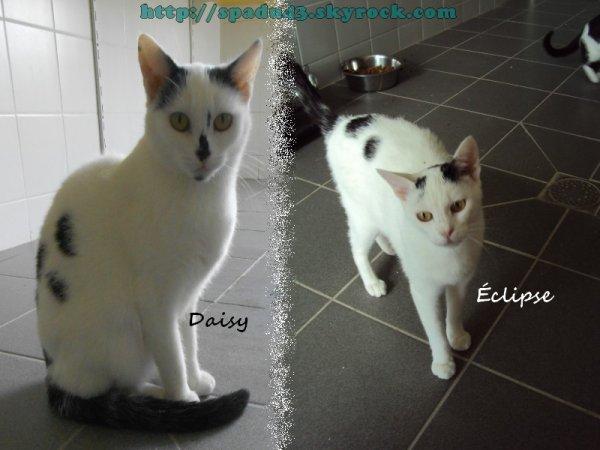 Daisy et Éclipse