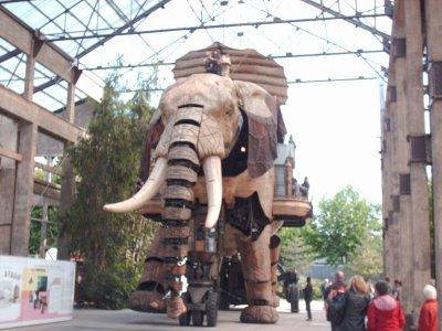 le 8 décembre 2010 gros néléphant