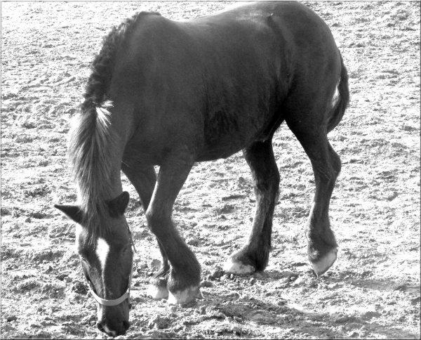 ♥Il sais comment me rendre heureuse, il sais mes points faibles mieux qu'un cheval de club, il sais simplement comment réagire avec moi. Il fait tout pour me fair plaisire, il sais me rendre le sourire que j'ai pérdu... Mon Poney n'est peut-être pas le meilleur cheval dréssé à la pérféction, mais c'est le plus romantique♥ Il est mon bonheur depuis le 1er jour ou je l'ai vu. C'est devenu une partie vitale qu'aucun autre a su conquérire. Merci Poney. Merci pour tout .