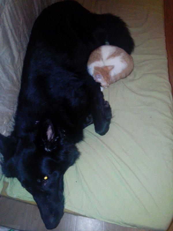 mon chaton avec la chienne de mon copain