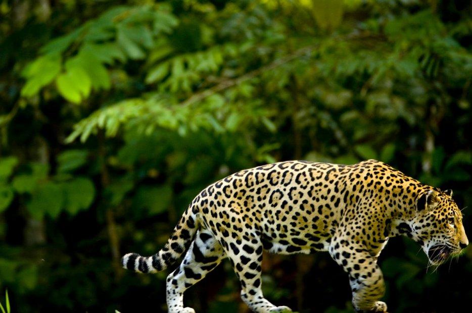 Blog de Amazonie