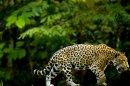 Photo de Amazonie