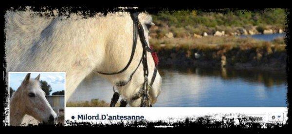 Présentation du poney & de la WebMiss