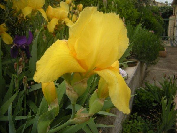 suite des fleurs de mon petit jardin