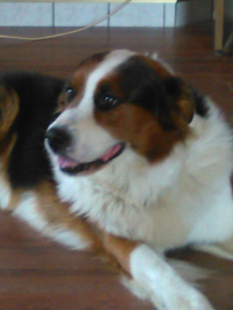 Moi ma mon gran- pere et mes  chien