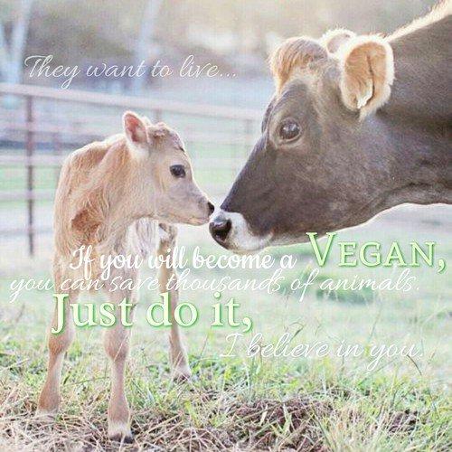 Différencier le végétarisme, le végétalisme et le véganisme