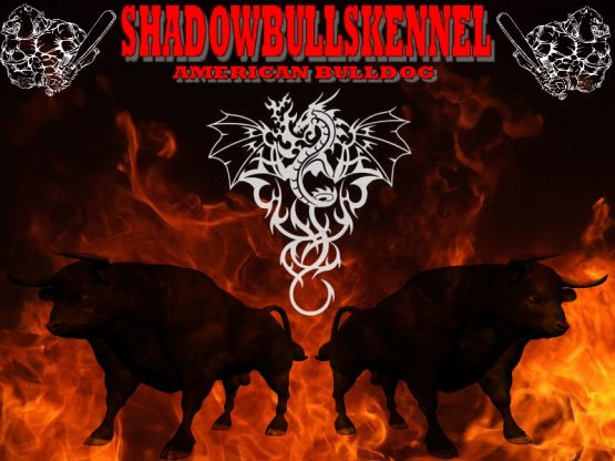 SHADOWBULLSKENNEL