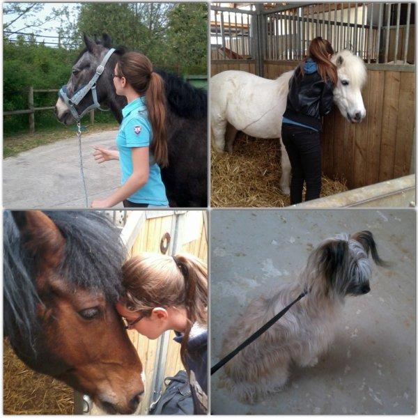 Interview de emma-jablines-equitation!