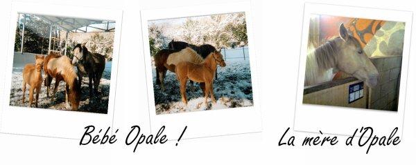 Opale - Présentation