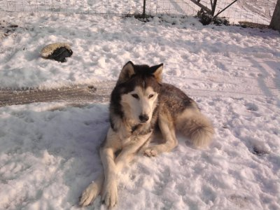 Tomy dans la neige