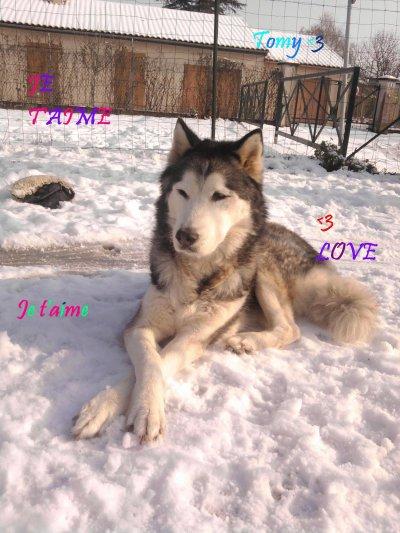 Tomy allongé dans la neige