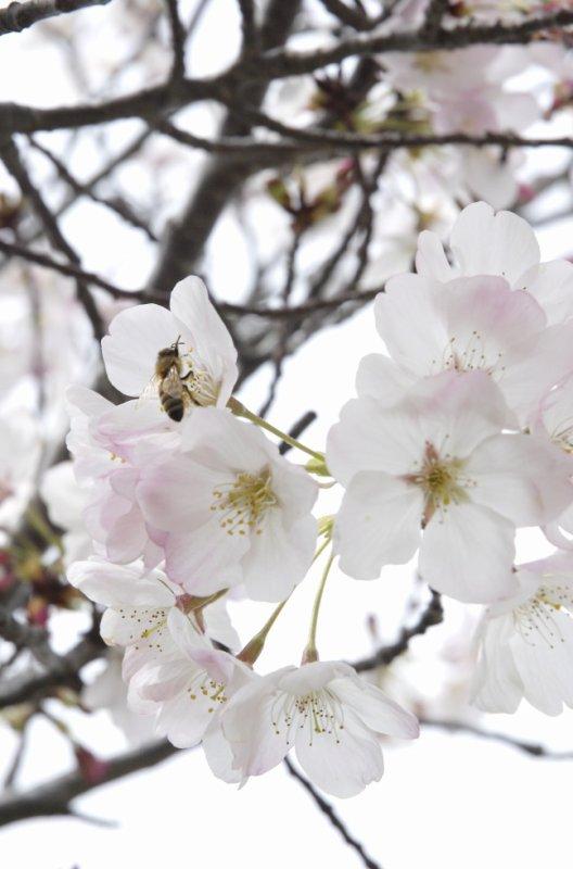 belle fleur.