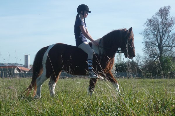 Jeux n°1 : Votre cheval/poney.