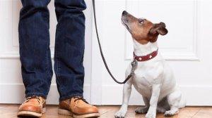 Les chiens sont aussi jaloux que leurs maîtres