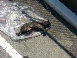 Dans le Bronx, un taré met le feu à son chat !