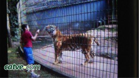 Encouragé par son père, un garçon de 11 ans se fait arracher un bras par un tigre !!!